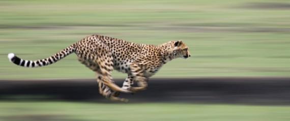 BLURRED RUN ANIMAL