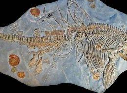 بعد أن سُمِّيت بالخطأ.. الحفريات ذات الذيل المزيف تعود لأكبر تنين بحري عُثر عليه