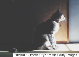 고양이 학대 영상을 SNS에 공유한 남성의 최후