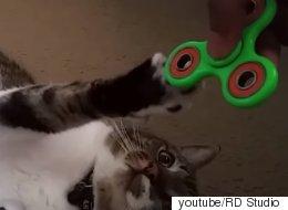 피젯 스피너를 돌리는 고양이들