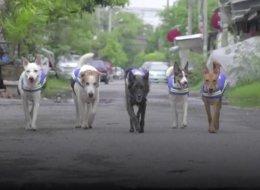فيديو: الكلاب الضالة ترتدي زياً رسمياً وتتلقى تدريباً للحفاظ على الأمن في تايلاند