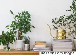 Αυτά τα 5 φυτά εσωτερικού χώρου θα σας κάνουν να νιώσετε αμέσως καλύτερα