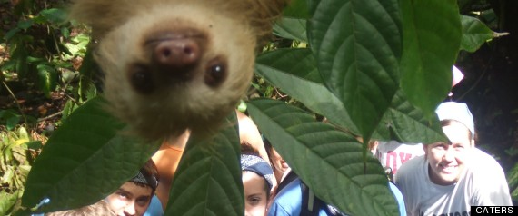CATERS_SLOTH_PHOTOBOMB_02