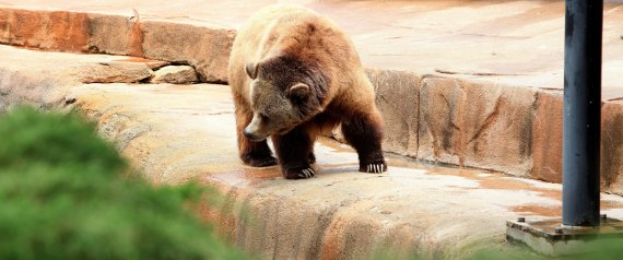 GRIZZLY ZOO