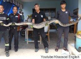 5m짜리 비단뱀이 가정집에 들어와 벌인 짓(영상)