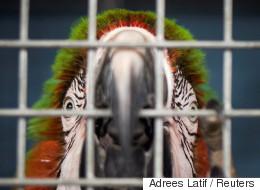 마이애미 최대 규모 동물원이 허리케인에 대비하다