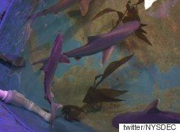 뉴욕 어느 지하실에서 상어 10마리가 발견됐다