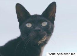 일본 '고양이의 섬'이 에드 시런을 초대하다(영상)