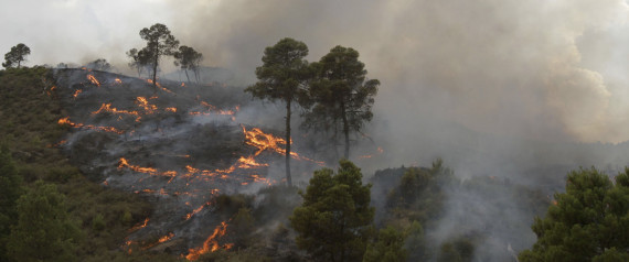 ALGERIA FOREST FIRE