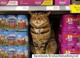 영국의 한 슈퍼마켓에 고양이 동상이 세워졌다