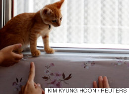 일본 열차에 고양이 30마리를 풀어놨다