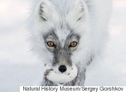 영국 자연사 박물관이 선정한 올해의 야생사진들