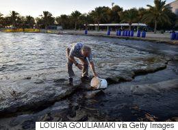 Συναγερμός από την οικολογική καταστροφή. Εντατικές προσπάθειες να καθαρίσουν οι ακτές. Τι καταγγέλλει η ΠΕΝΕΝ