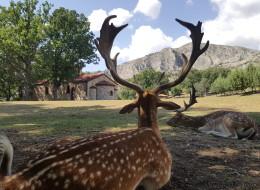 Το πάρκο εξημερωμένων ελαφιών της Κοζάνης που έχει μαγέψει μικρούς και μεγάλους