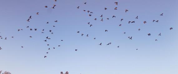 BIRDS ALGERIA