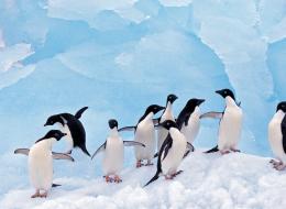 أكبر صحراء على وجه الأرض ولا توجد بها زواحف.. 7 حقائق مذهلة عن أنتاركتيكا الجليدية