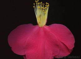 Τα φαγιούμ των λουλουδιών: Η Μαρία Στέφωση δημιουργεί προσωπικά πορτρέτα λουλουδιών, δίνοντάς τους νέα ζωή
