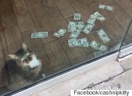 이 고양이 옆에 지폐가 한가득 쌓여 있었던 이유