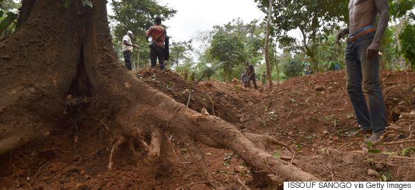 Guardian: Πώς η βιομηχανία της σοκολάτας καταστρέφει τα δάση της Αφρικής