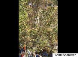 노르웨이인 수십 명이 이 나무 앞에 멈춰선 이유