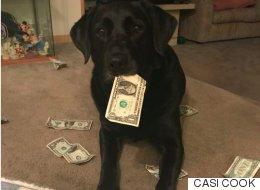 이 강아지가 돈을 '저축'하는 이유(사진)