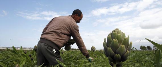 ALGERIA WORKERS