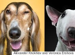 개들의 가장 '인간적인' 표정을 포착했다(사진14)