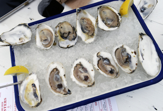 oyster oysters