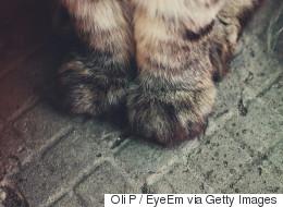 고양이 마구 폭행한 주인에게 '구두 경고'만 하다