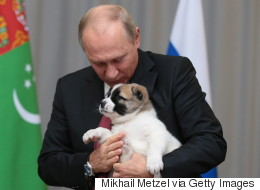 강아지 선물 받은 푸틴의 반응은 반전이다(사진)