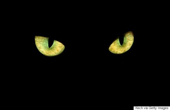black cat kech