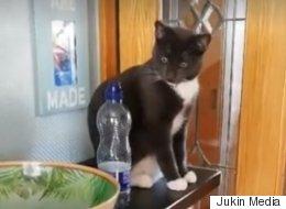 물병을 정말 싫어하는 고양이의 싸움(영상)
