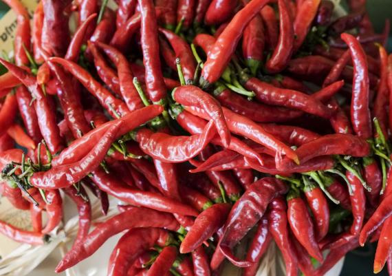 chilling pepper