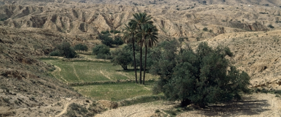 TUNISIA DESERT