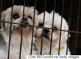 미 캘리포니아가 '개 농장'의 반려동물 판매를 전면 금지한다