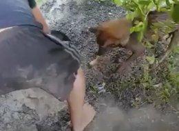 فعلت المستحيل كي تنقذ صغارها.. شاهِد كيف هي الأمومة عند الكلاب