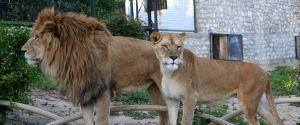 Tunisia Zoo