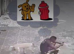 ماذا تفعل إذا تبوَّل عليك كلب في الشارع؟ ردُّ فعل هذا الشاب هو الأغرب!