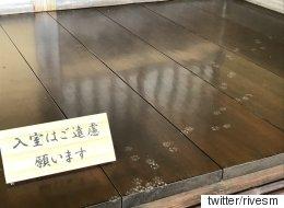 일본 고양이 애호가의 상상력을 부추긴 사진 한 장