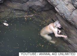 우물에 빠진 강아지는 구조되기만을 기다렸다