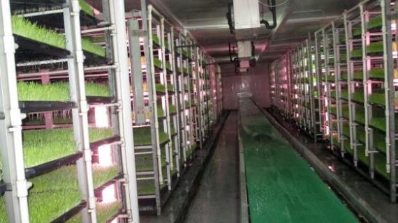 dairy in qatar