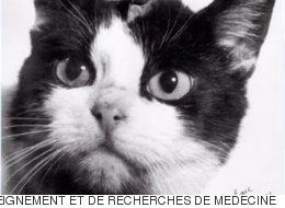 세상에서 잊혀진 세계 최초의 우주 고양이