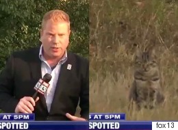 생방송 뉴스에 완벽한 타이밍으로 등장한 고양이의 위엄(영상)