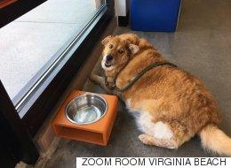 비만 강아지가 다이어트에 성공했다(사진)