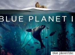 Το «Βlue Planet II» του ΒΒC ξεκινά και υπόσχεται να μας χαρίσει μοναδικές εικόνες από τον θαλάσσιο κόσμο
