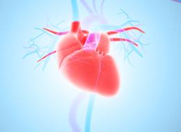 لماذا لا يوجد القلب في الجانب الأيمن من الصدر؟ تعرَّف على القوى الغامضة التي تدفعه يساراً!