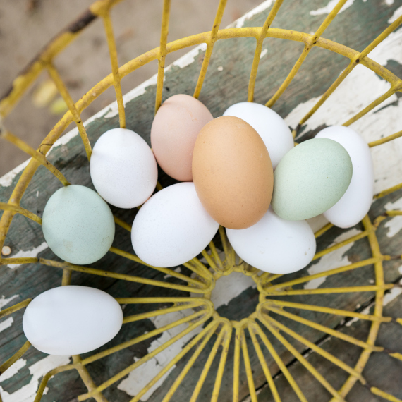 brown and white egg