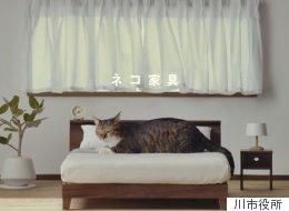 고양이를 위한 수작업 가구가 나왔다(사진, 영상)