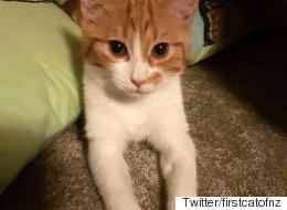 '뉴질랜드 실세'인 이 고양이의 정체(사진)