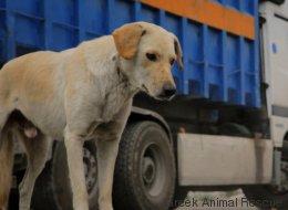 Τα αδέσποτα σκυλιά της Αθήνας μέσα από ένα συγκλονιστικό ντοκιμαντέρ